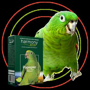 Harmony Birds